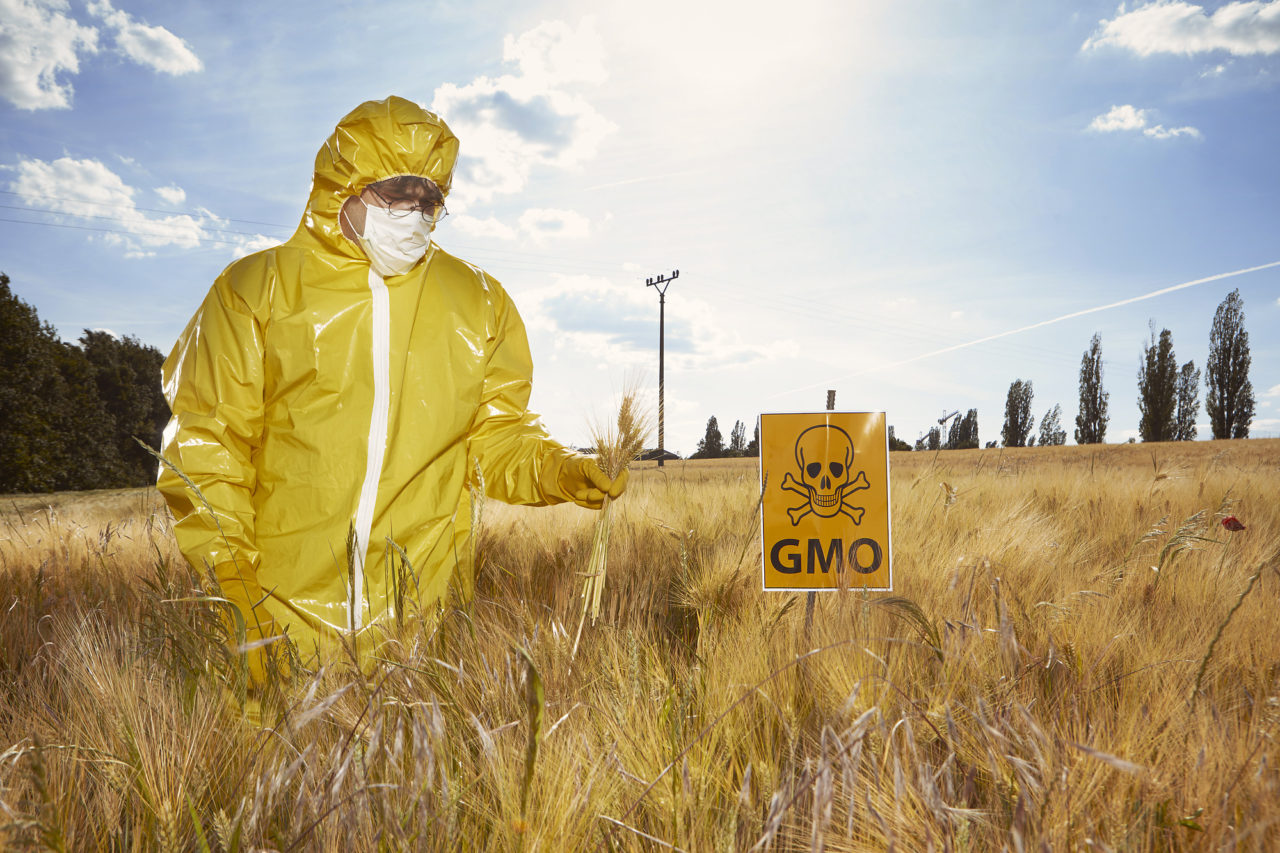 Man in yellow suit protesting against genetically modified cereals on field