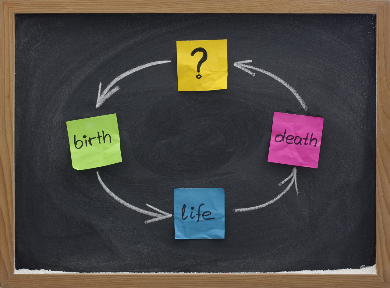 life cycle or reincarnation concept on blackboard