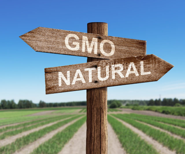 GMO and natural road sign with pea field as a background