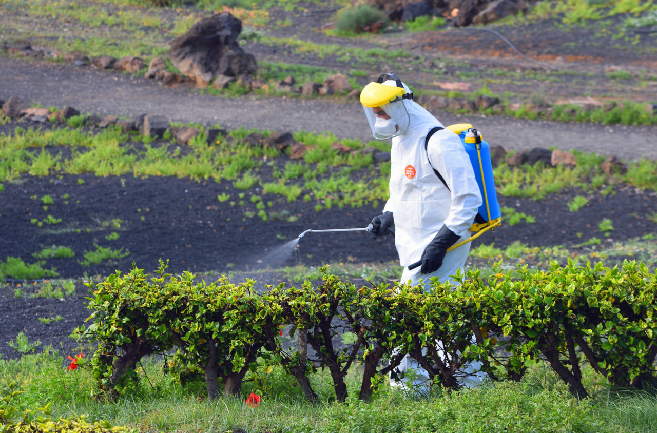 Insecticide Spraying of garden man wearing protective suit.