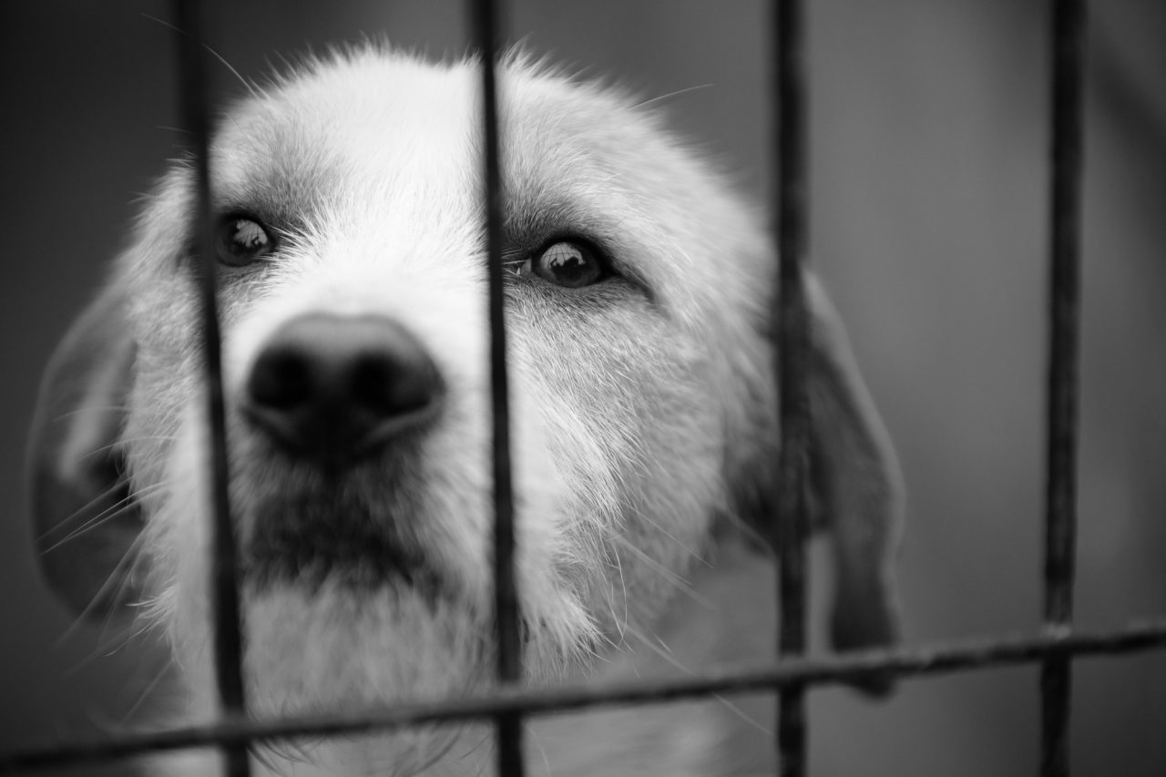 caged dog, with sad face